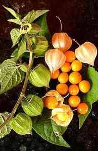 Goldenberry