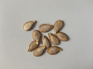 "Squash seeds ""Musquée de Provence"" (Cucurbita moschata)"