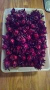 Roselle 25 seeds
