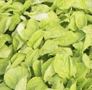 Edible White Leaf Amaranth Seeds