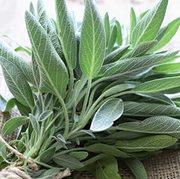 Sage Seeds (medicinal)