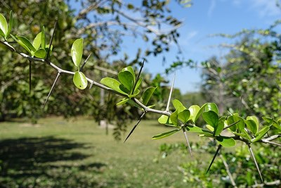 Fruit and Spice Park - Homestead, Florida
