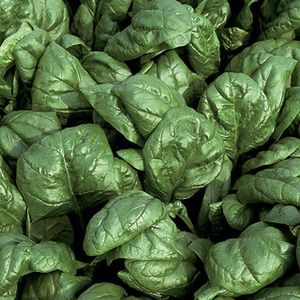 Spinach Palco Organic Seeds